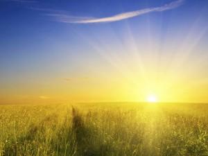 field-sun-light-traces-road-awakening